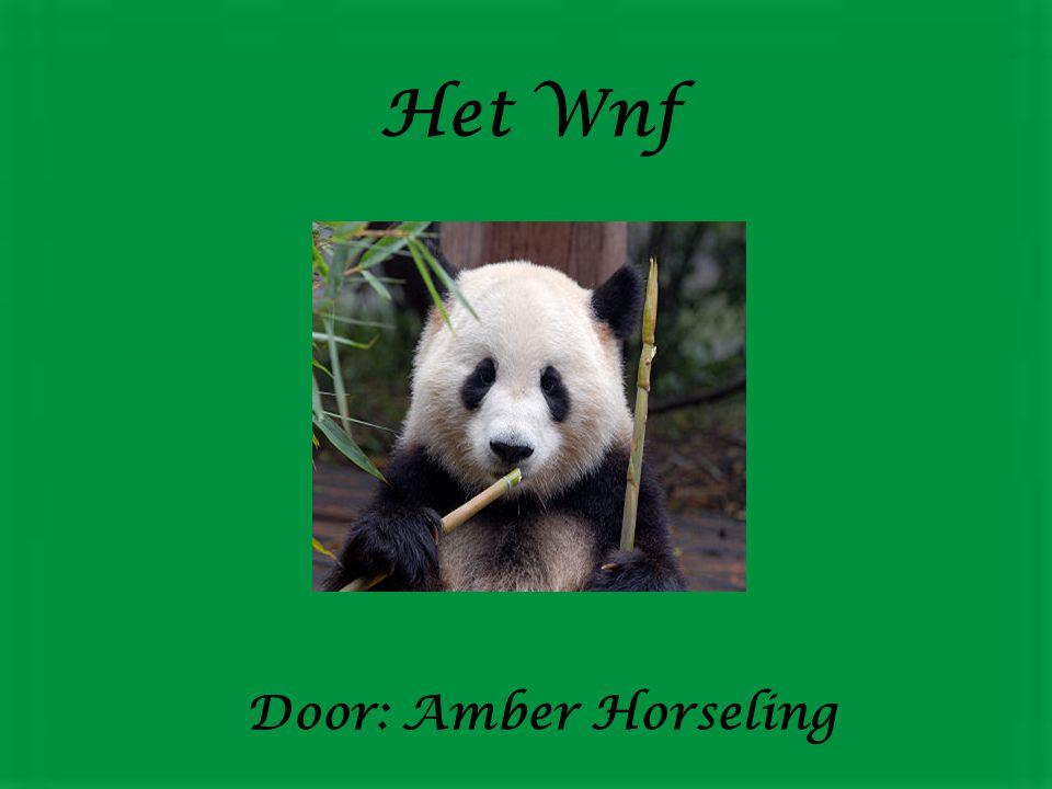 Door: Amber Horseling Het Wnf