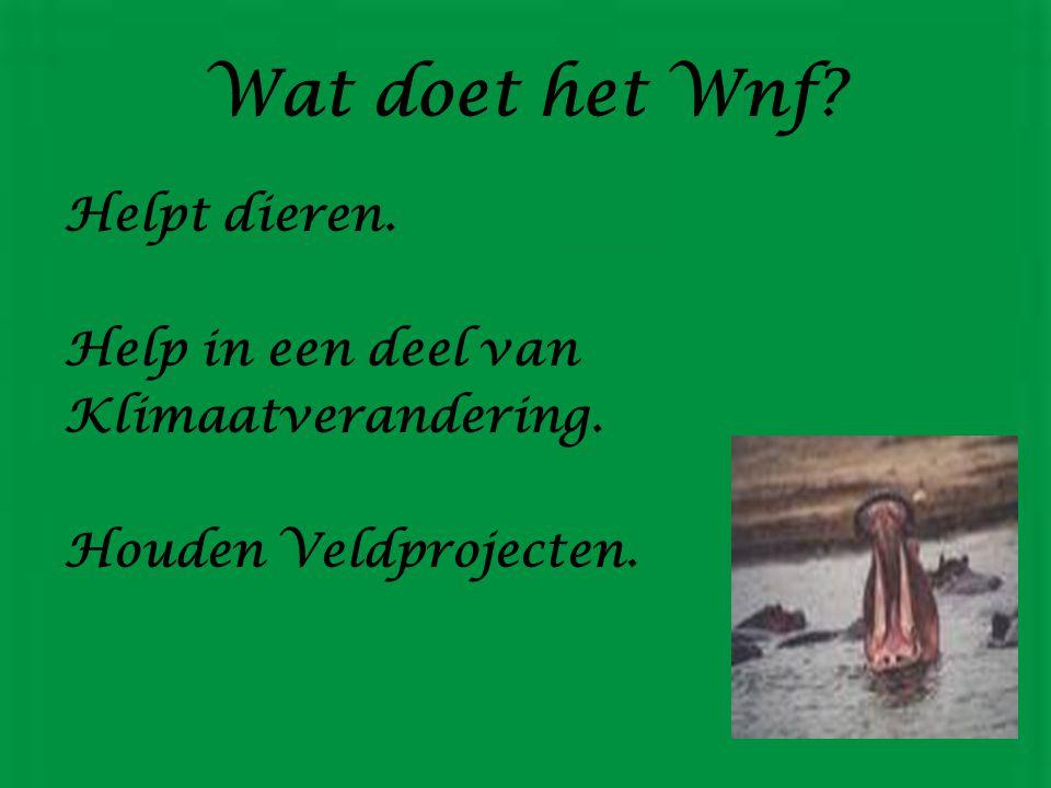De geschiedenis van Het Wnf 1872 nartuurbescherming. 1948 Iunc. Wwf In 1966 Naam verandert in Wnf. 11 September 1961 Opgericht