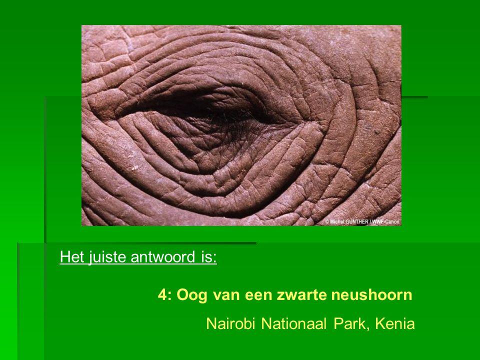 Het juiste antwoord is: 4: Oog van een zwarte neushoorn Nairobi Nationaal Park, Kenia