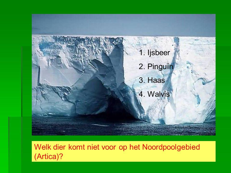 Welk dier komt niet voor op het Noordpoolgebied (Artica)? 1.Ijsbeer 2.Pinguïn 3.Haas 4.Walvis