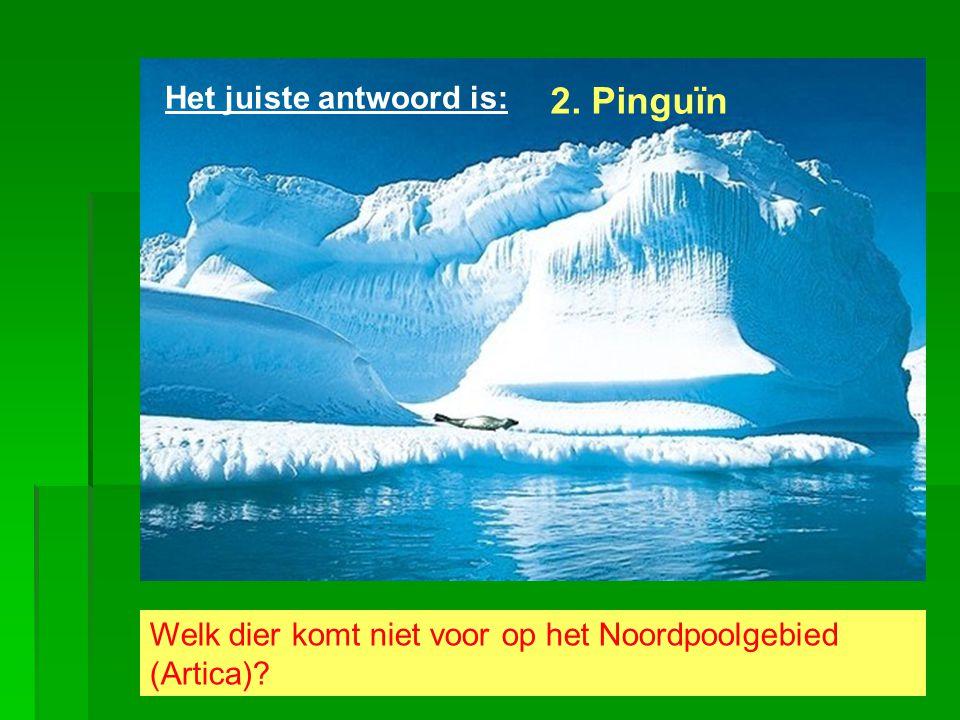 Welk dier komt niet voor op het Noordpoolgebied (Artica)? Het juiste antwoord is: 2. Pinguïn
