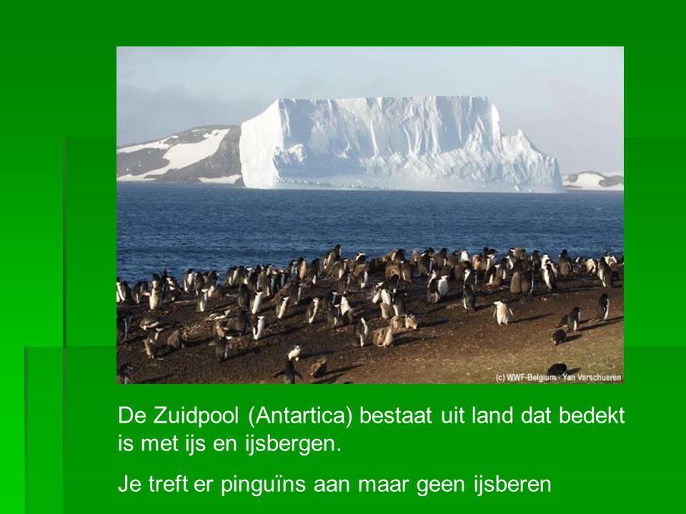 De Zuidpool (Antartica) bestaat uit land dat bedekt is met ijs en ijsbergen. Je treft er pinguïns aan maar geen ijsberen