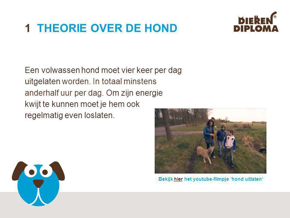 21 THEORIE OVER DE HOND Alle honden stammen af van één voorouder.