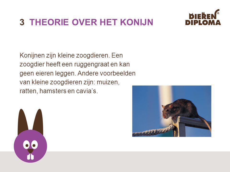 13 THEORIE OVER DE KAT Katten zijn schone dieren.Ze plassen en poepen netjes in de kattenbak.