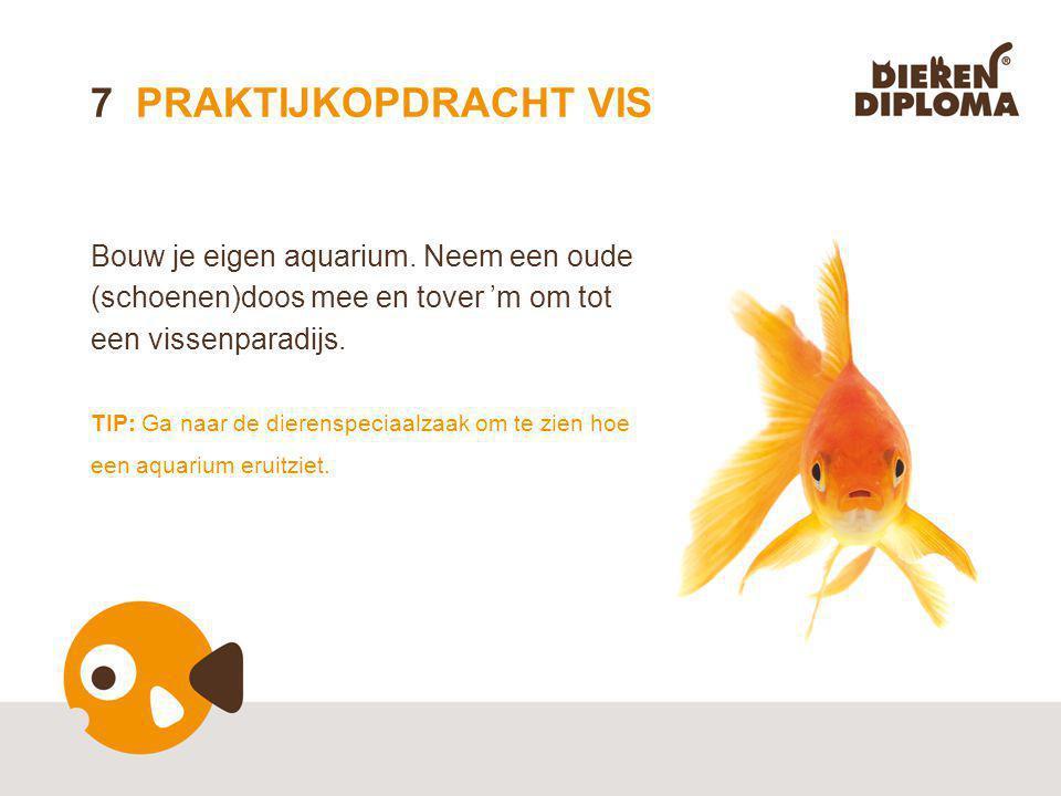 7 PRAKTIJKOPDRACHT VIS Bouw je eigen aquarium.