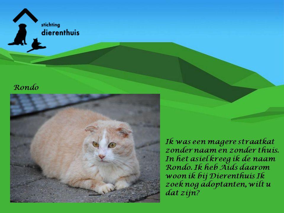Ik was een magere straatkat zonder naam en zonder thuis. In het asiel kreeg ik de naam Rondo. Ik heb Aids daarom woon ik bij Dierenthuis Ik zoek nog a