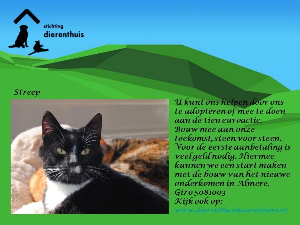 U kunt ook op andere manieren helpen.Hart van Nederland is op zoek naar het hart van nederland .