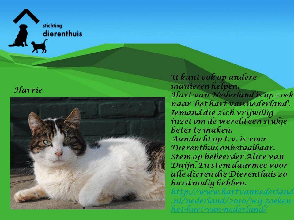 U kunt ook op andere manieren helpen. Hart van Nederland is op zoek naar 'het hart van nederland'. Iemand die zich vrijwillig inzet om de wereld een s