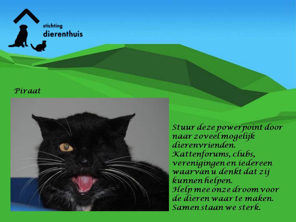 Stuur deze powerpoint door naar zoveel mogelijk dierenvrienden. Kattenforums, clubs, verenigingen en iedereen waarvan u denkt dat zij kunnen helpen. H
