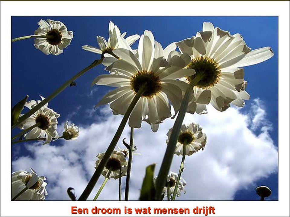 Een droom is wat mensen drijft