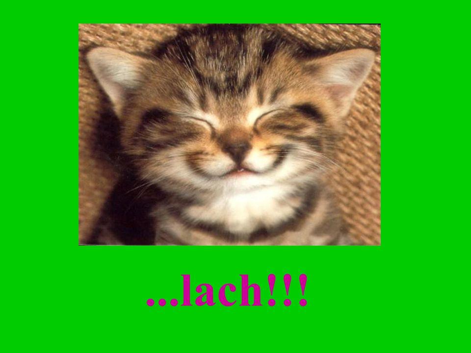 ...lach!!!