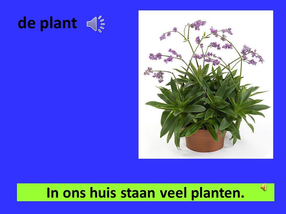 de (pot) grond Ik geef de planten nieuw potgrond.