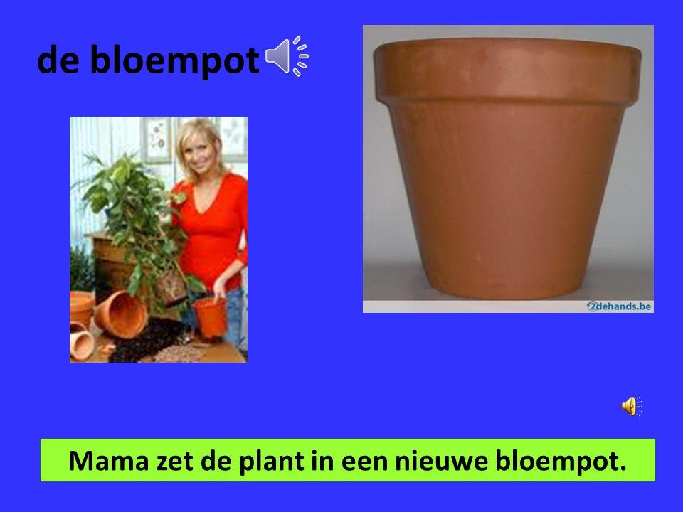 de plant In ons huis staan veel planten.