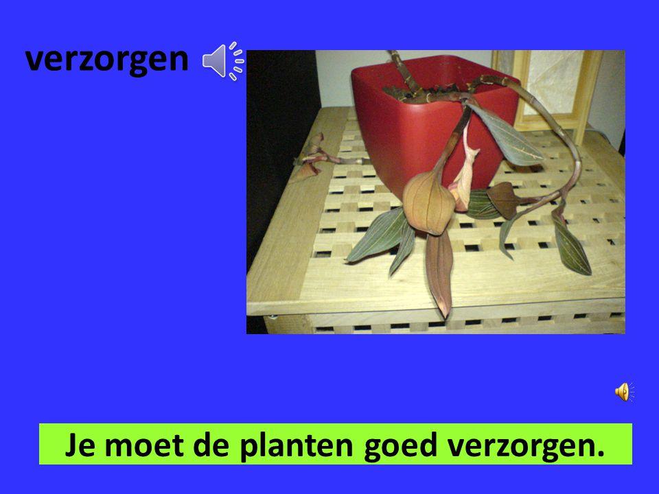 groeien De planten gaan groeien als je ze water geeft.