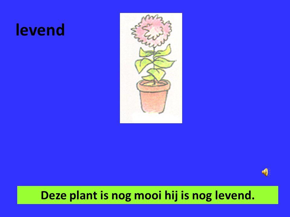 verzorgen Je moet de planten goed verzorgen.