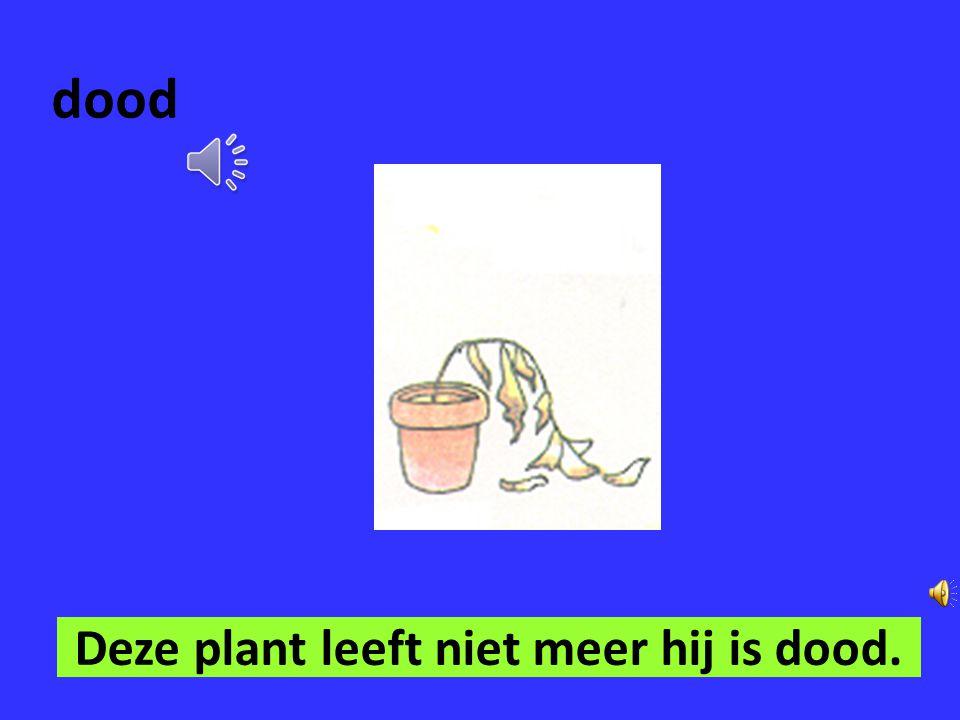 levend Deze plant is nog mooi hij is nog levend.