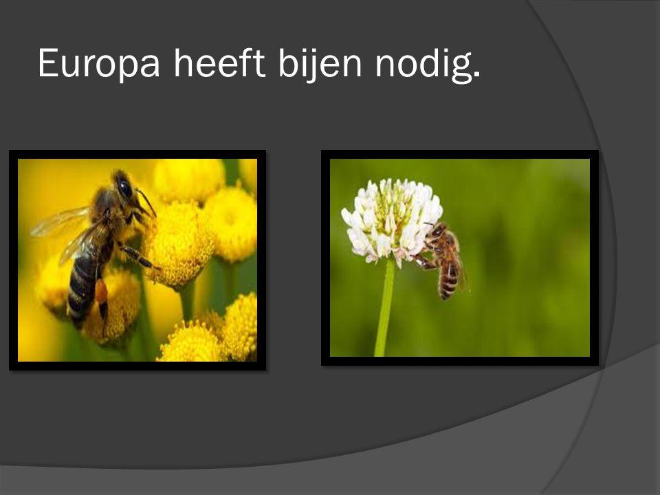 Europa heeft bijen nodig.