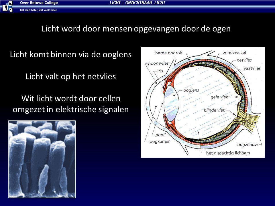 Licht word door mensen opgevangen door de ogen LICHT – ONZICHTBAAR LICHT Licht komt binnen via de ooglens Licht valt op het netvlies Wit licht wordt door cellen omgezet in elektrische signalen