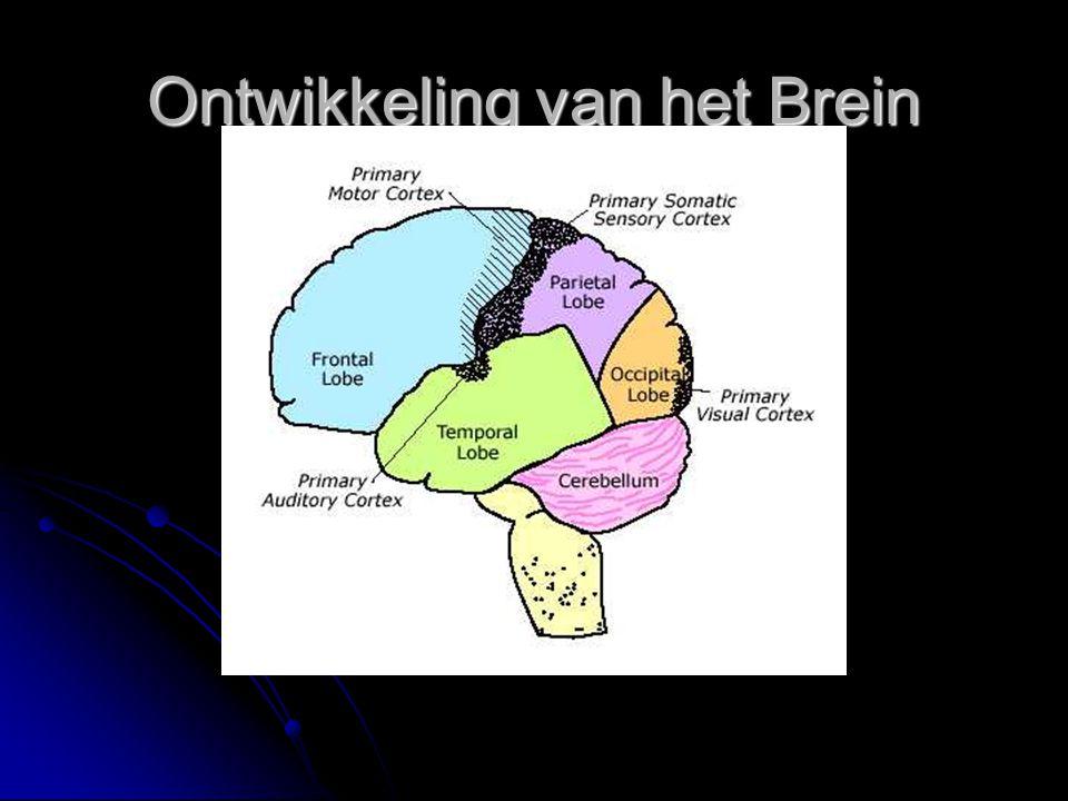 Do's  Help pubers met alles waar hun brein moeite mee heeft.