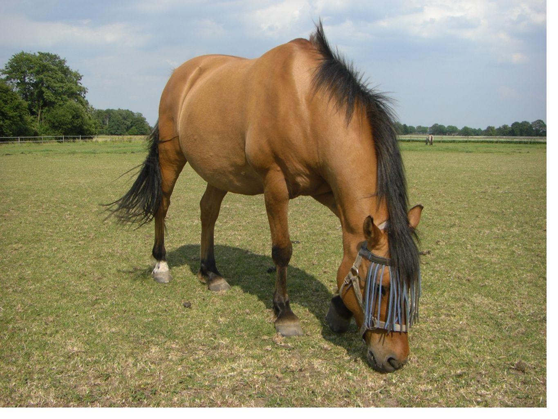• Paard • Client • Therapeut Driehoeks-situatie