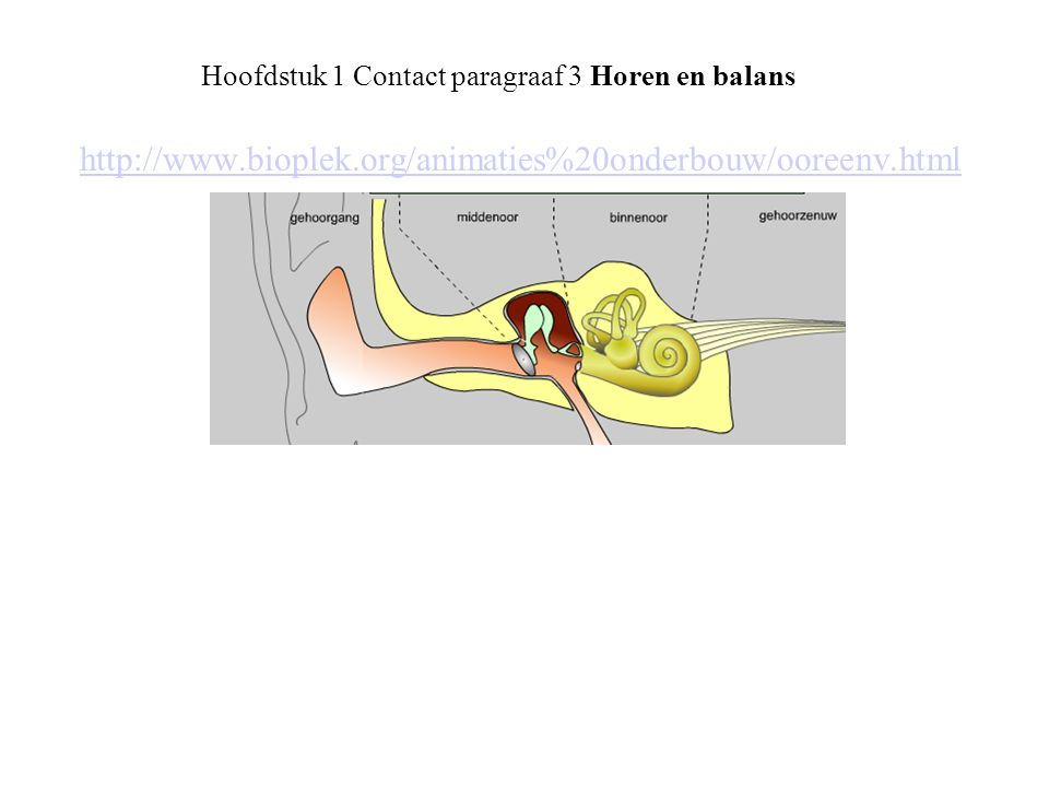 Hoofdstuk 1 Contact paragraaf 3 Horen en balans Evenwichtzintuig: • registreren draaiende beweging (3 halfcirkelvormige kanalen) • registreren druk verschil (gehoorsteentjes)
