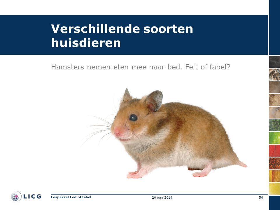 Verschillende soorten huisdieren Hamsters nemen eten mee naar bed. Feit of fabel? 56 Lespakket Feit of fabel 20 juni 2014