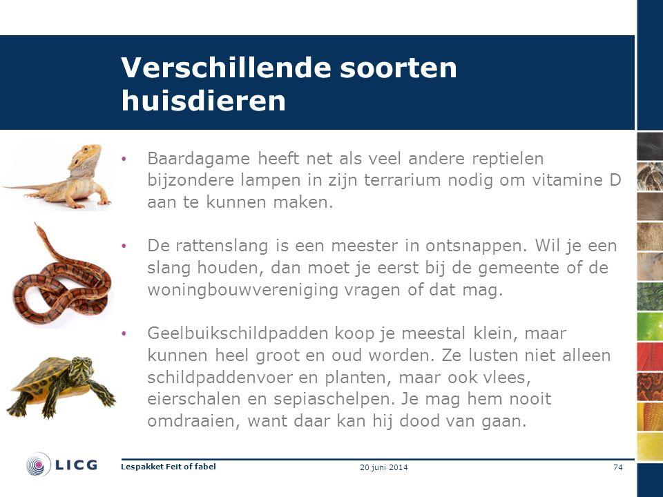 Verschillende soorten huisdieren • Baardagame heeft net als veel andere reptielen bijzondere lampen in zijn terrarium nodig om vitamine D aan te kunne