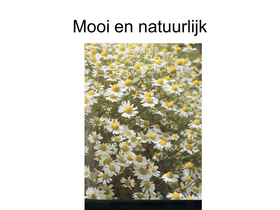 Plantaardig •Plantaardige stoffen worden al eeuwenlang gebruikt bij natuurlijke geneeswijzen •Kamille bijvoorbeeld is een bekend bloemetje uit de natuur met bijzondere geneeskrachtige werking.