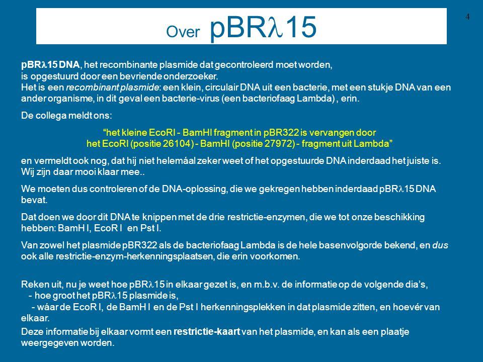 5 Info over pBR322 Restrictiekaartje van pBR322 met de posities van de BamH I, EcoR I en Pst I herkenningsplaatsen: Nog even ter herinnering: over pBR  15 was het volgende vermeld: het kleine EcoRI - BamHI fragment in pBR322 is vervangen door het EcoRI (positie 26104) - BamHI (positie 27972) - fragment uit Lambda