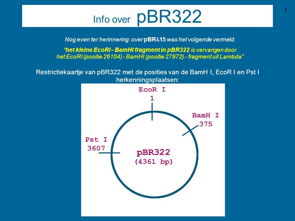 6 Info over Lambda DNA Bacteriophage Lambda DNA omvat 48502 baseparen, en is lineair.