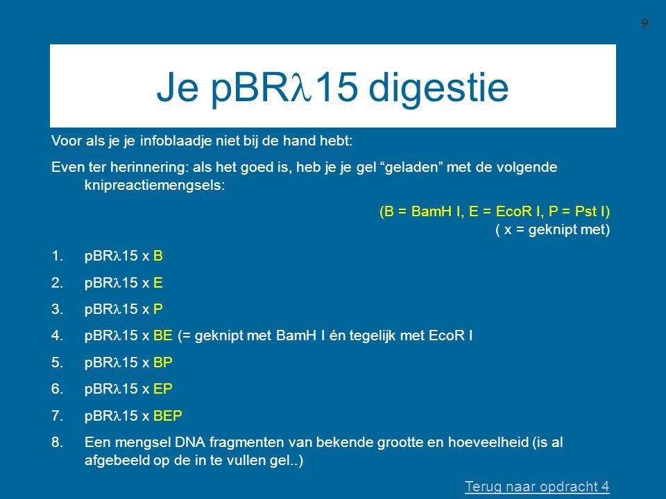 9 Je pBR  15 digestie Voor als je je infoblaadje niet bij de hand hebt: Even ter herinnering: als het goed is, heb je je gel geladen met de volgende knipreactiemengsels: (B = BamH I, E = EcoR I, P = Pst I) ( x = geknipt met) 1.pBR  15 x B 2.pBR  15 x E 3.pBR  15 x P 4.pBR  15 x BE (= geknipt met BamH I én tegelijk met EcoR I 5.pBR  15 x BP 6.pBR  15 x EP 7.pBR  15 x BEP 8.Een mengsel DNA fragmenten van bekende grootte en hoeveelheid (is al afgebeeld op de in te vullen gel..) Terug naar opdracht 4