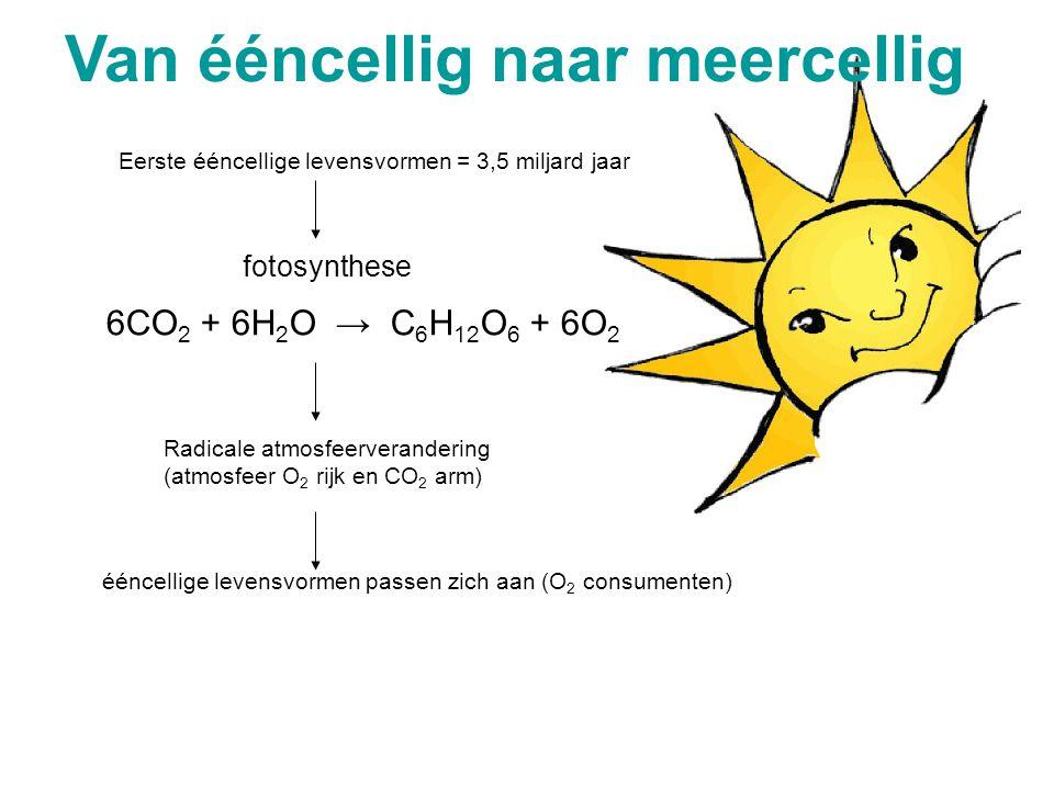 Oeratmosfeer: NH 3, H 2 O, H 2 S en CH 4 (geen O 2 ) Oeroceanen: opgeloste metaalionen, fosfaten & silicaten Energie: UV-straling, elektrische ontladi
