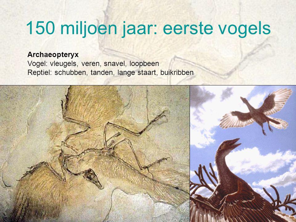 Dinosauriërs 245 miljoen jaar tot 65 miljoen jaar Uitsterven dinosauriërs komeetinslag?