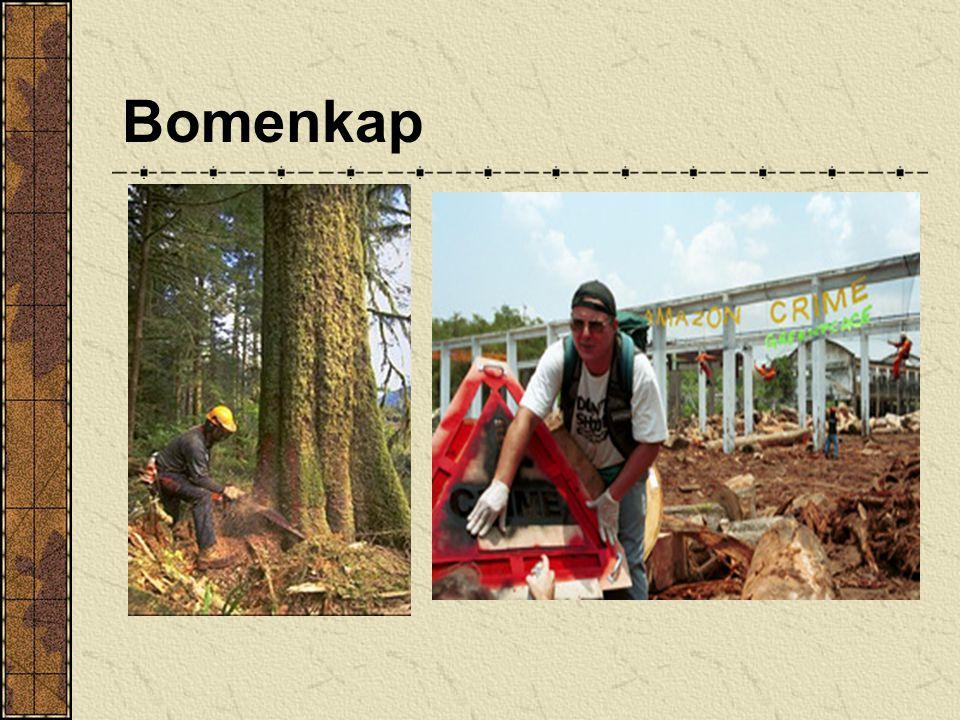 Honger Tachtig procent van de grote oerbosgebieden is vernietigd door de honger van de rijke landen naar hout en papier Bomen van honderd jaar oud wor