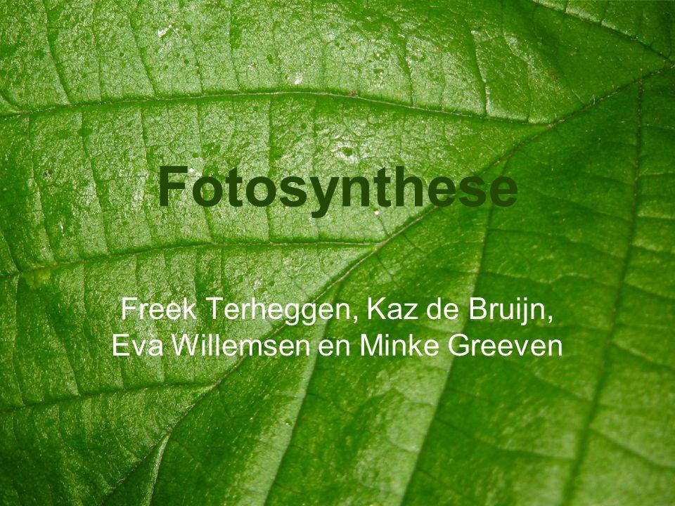 Fotosynthese Freek Terheggen, Kaz de Bruijn, Eva Willemsen en Minke Greeven