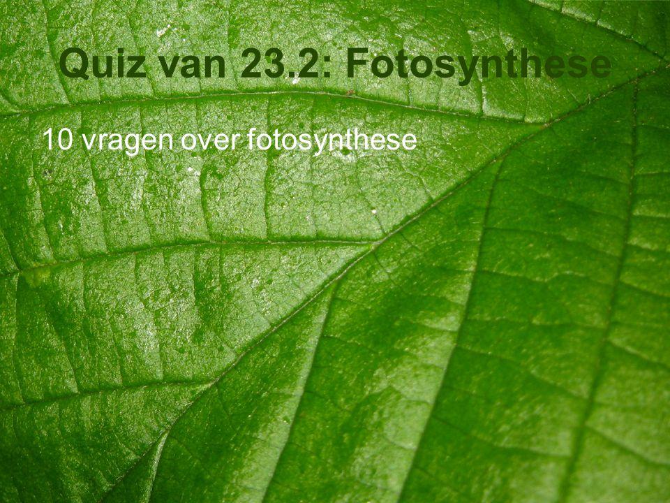 Quiz van 23.2: Fotosynthese 10 vragen over fotosynthese
