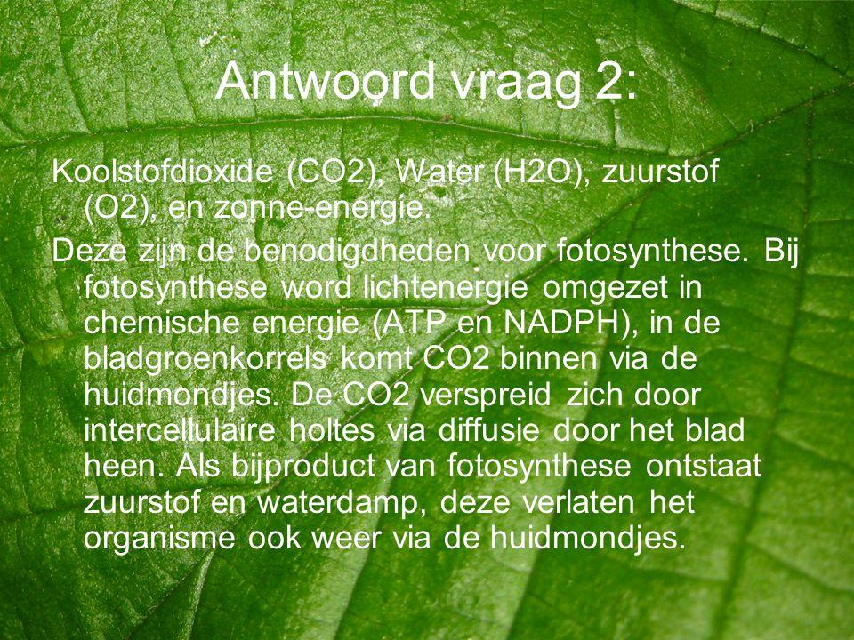 Antwoord vraag 2: Koolstofdioxide (CO2), Water (H2O), zuurstof (O2), en zonne-energie. Deze zijn de benodigdheden voor fotosynthese. Bij fotosynthese