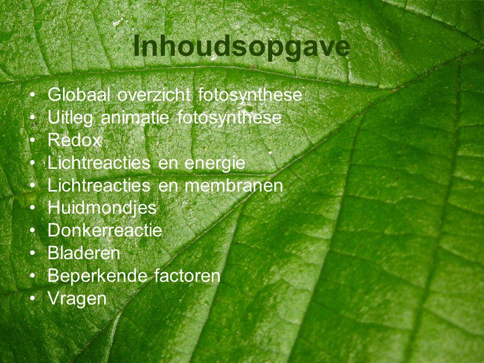 Inhoudsopgave •Globaal overzicht fotosynthese •Uitleg animatie fotosynthese •Redox •Lichtreacties en energie •Lichtreacties en membranen •Huidmondjes