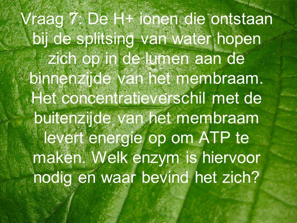 Vraag 7: De H+ ionen die ontstaan bij de splitsing van water hopen zich op in de lumen aan de binnenzijde van het membraam. Het concentratieverschil m