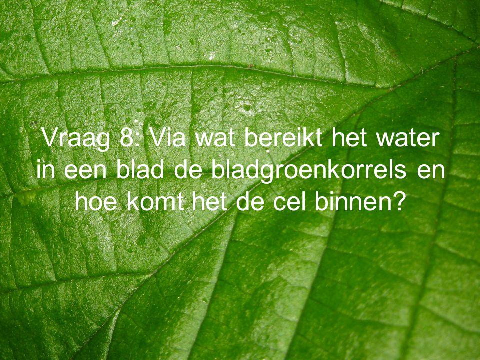 Vraag 8: Via wat bereikt het water in een blad de bladgroenkorrels en hoe komt het de cel binnen?