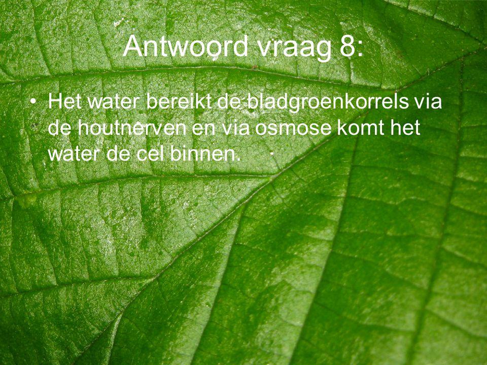 Antwoord vraag 8: •Het water bereikt de bladgroenkorrels via de houtnerven en via osmose komt het water de cel binnen.