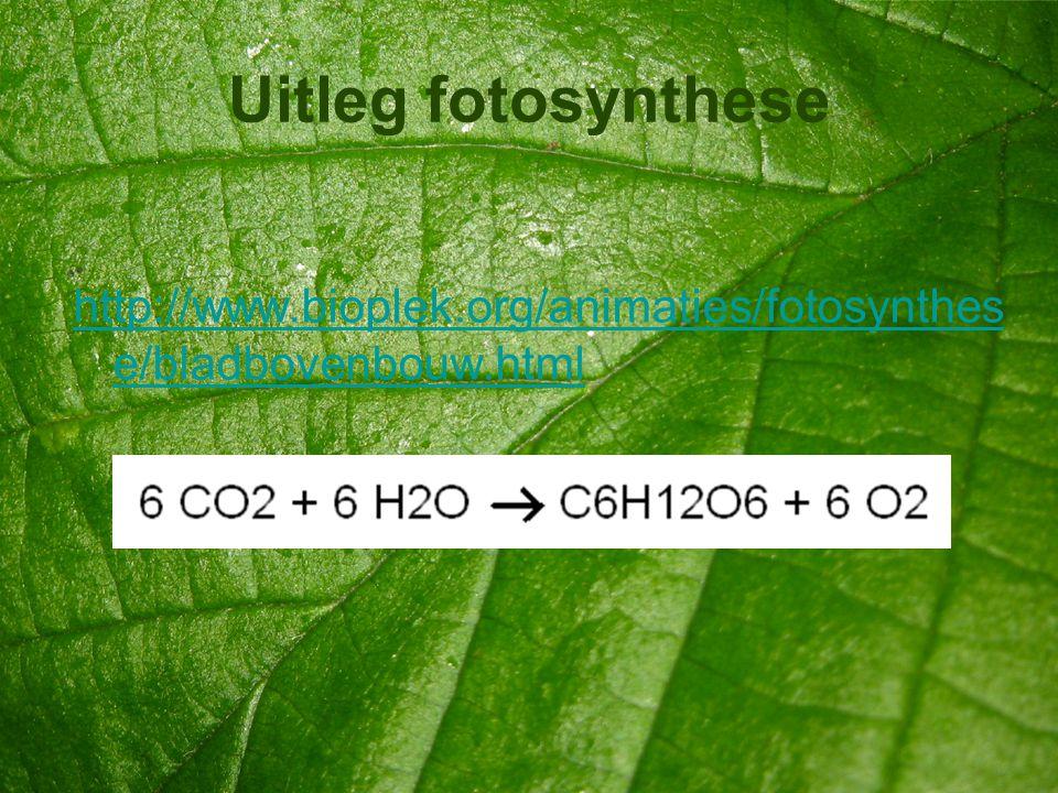 Uitleg fotosynthese http://www.bioplek.org/animaties/fotosynthes e/bladbovenbouw.html