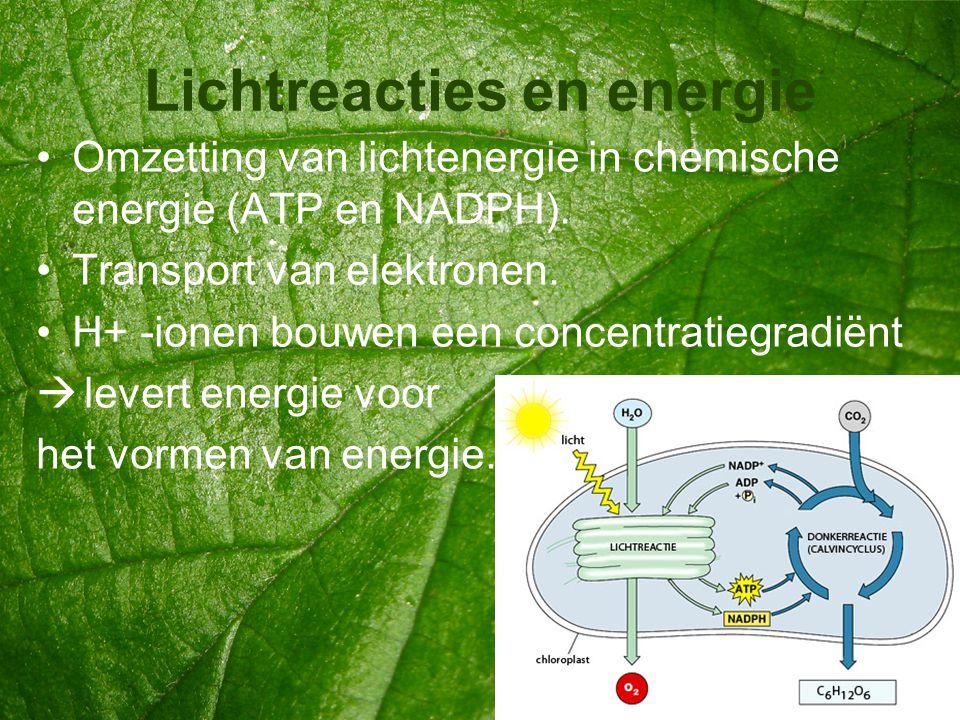 Lichtreacties en energie •Omzetting van lichtenergie in chemische energie (ATP en NADPH). •Transport van elektronen. •H+ -ionen bouwen een concentrati