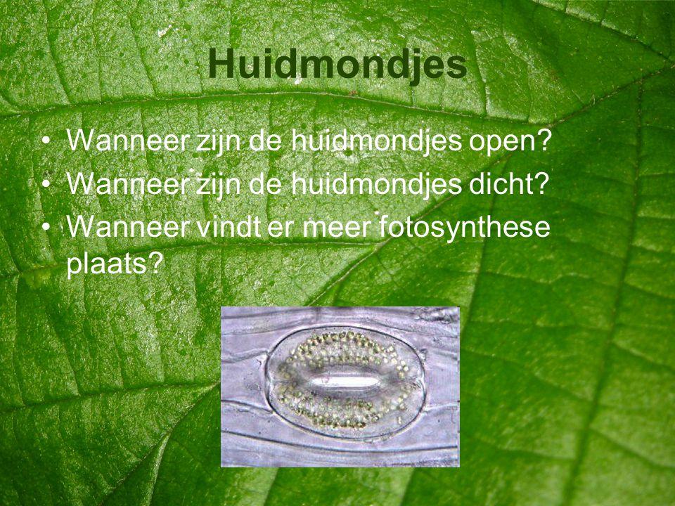 Huidmondjes •Wanneer zijn de huidmondjes open? •Wanneer zijn de huidmondjes dicht? •Wanneer vindt er meer fotosynthese plaats?