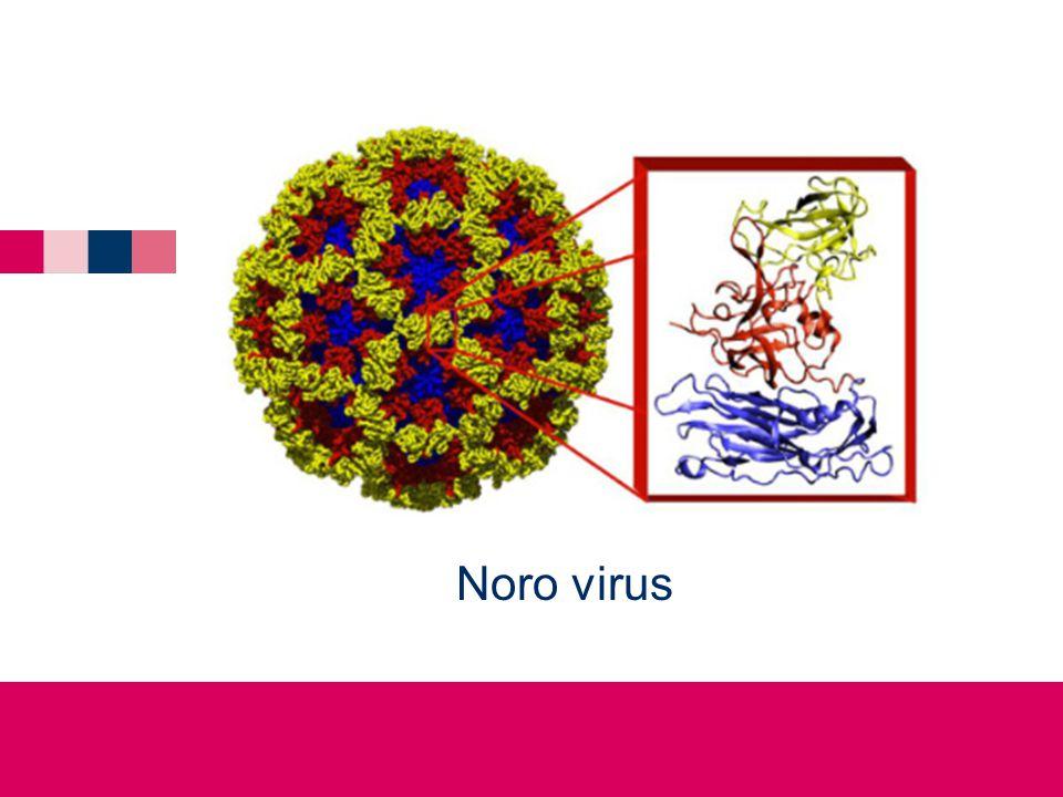 Noro virus