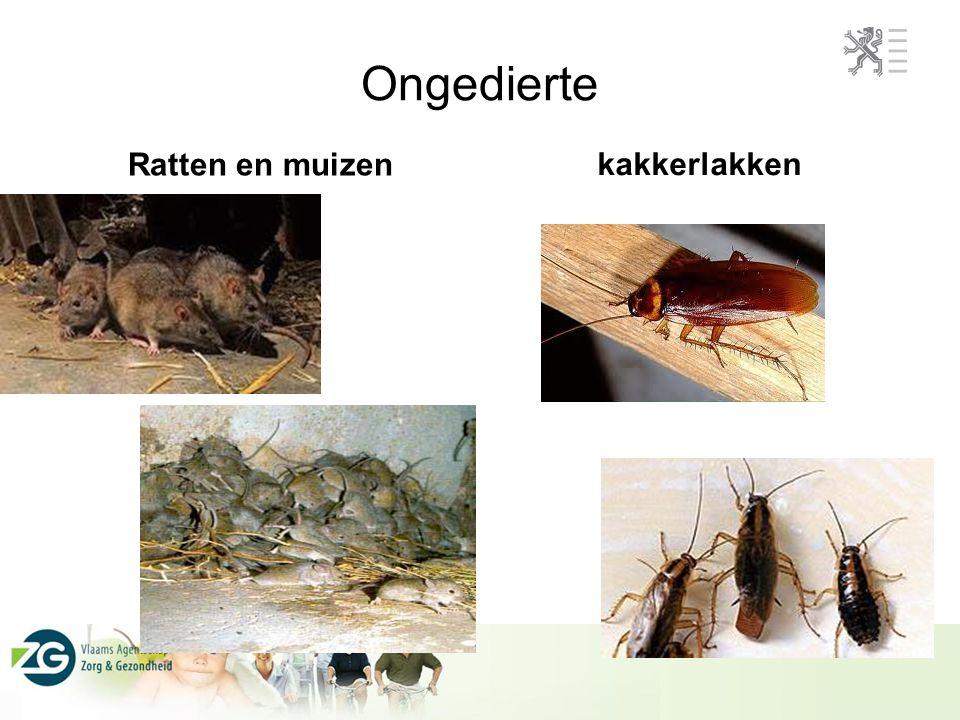 Ongedierte Ratten en muizen kakkerlakken