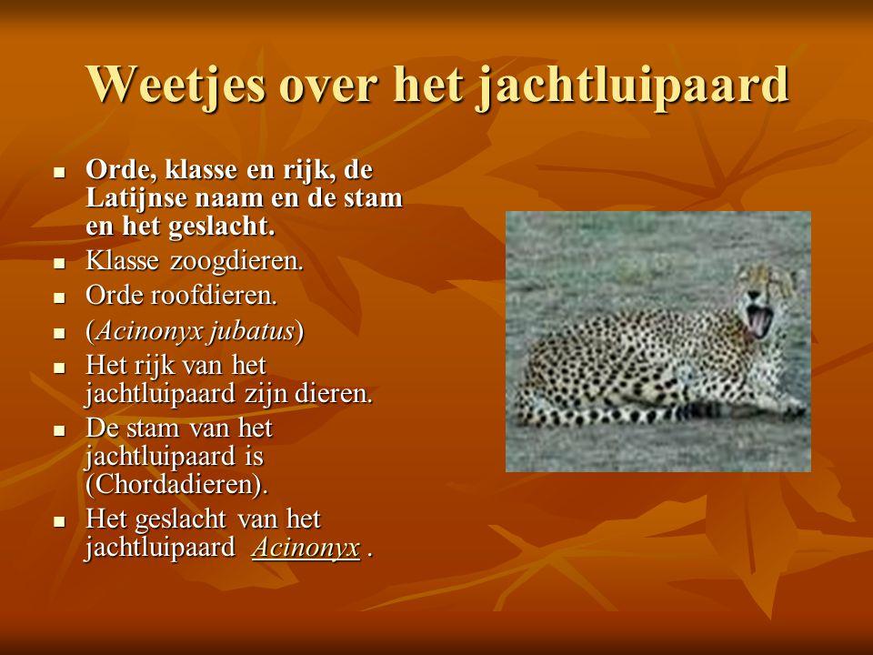 Weetjes over het jachtluipaard  Orde, klasse en rijk, de Latijnse naam en de stam en het geslacht.  Klasse zoogdieren.  Orde roofdieren.  (Acinony