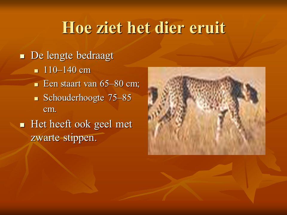 Hoe ziet het dier eruit  De lengte bedraagt  110–140 cm  Een staart van 65–80 cm;  Schouderhoogte 75–85 cm.  Het heeft ook geel met zwarte stippe