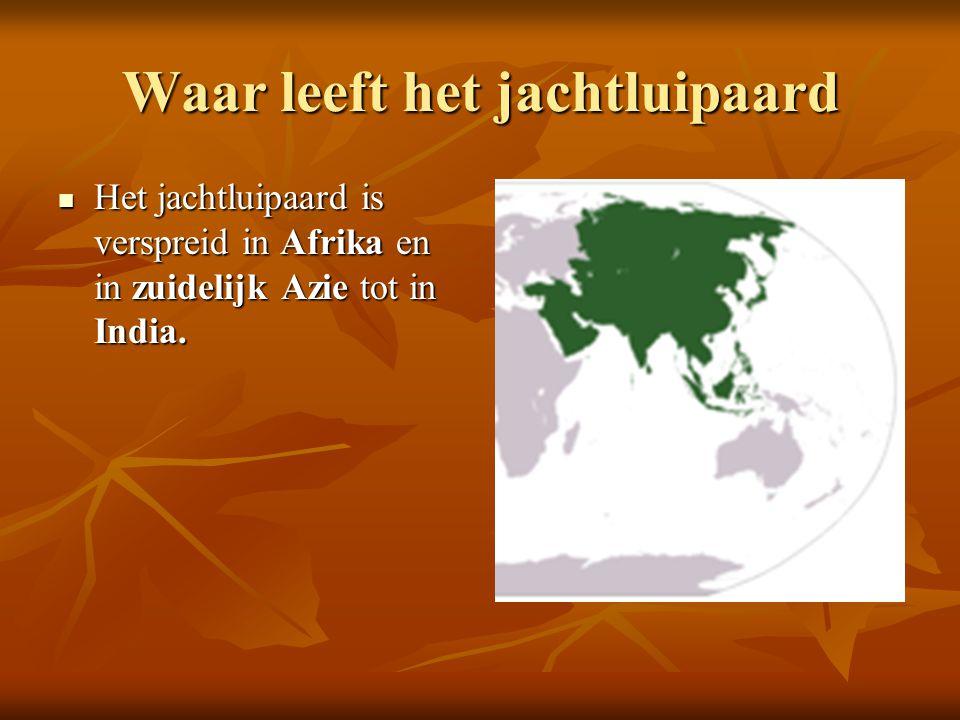 Waar leeft het jachtluipaard  Het jachtluipaard is verspreid in Afrika en in zuidelijk Azie tot in India.
