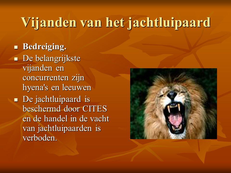 Vijanden van het jachtluipaard  Bedreiging.  De belangrijkste vijanden en concurrenten zijn hyena's en leeuwen  De jachtluipaard is beschermd door